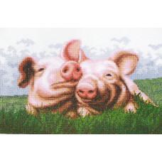 Свинки (А-060)