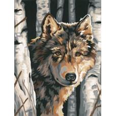 Волк между березами (91325)