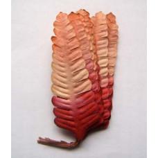 Листья красно-розовые (B14-40)
