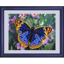Бабочка 1 (101)