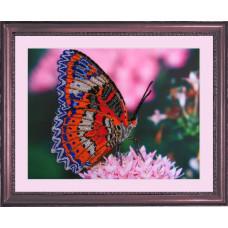 Бабочка 2 (102)