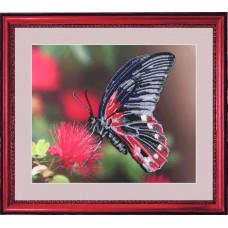 Бабочка 3 (103)