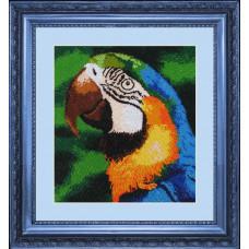 Попугай (504)