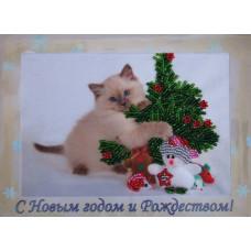 Котёнок (704)