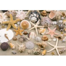 Бумага для декупажа Морское дно (фотокачество)(KR-B8146)