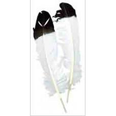 Перья белые с черным кончиком, Imitation Eagle Quil(B702)
