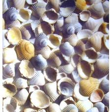 Калька Море, ракушки, 115 г. (UR-50634603R)
