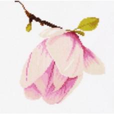 Цвет магнолии - Magnolia Bud (PN8161)