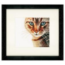 Кот - Cat Close Up (PN21202)