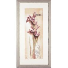 Ирис ботанический - Iris - Botanical (PN8049)