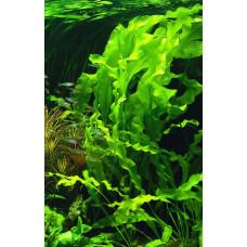 Отдушка для мыла Морские водоросли