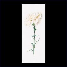 Белая гвоздика (GOK466)