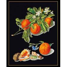 Апельсины (GOK3061B)