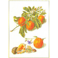 Апельсины (GOK3061)
