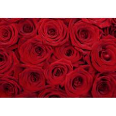 Бумага для декупажа Поле роз  (KR-B8150)