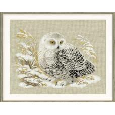 Белая сова (1241)