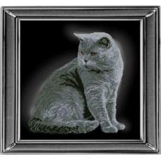 Британская короткошерстная кошка (21111)