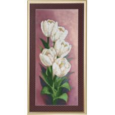 Белоснежные тюльпаны (Б-682)