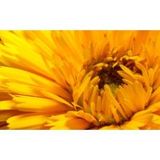Краситель пищевой водорастворимый, желтый
