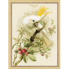 Белый какаду (1362)*