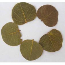 Листья водокраса натуральные, высушенные
