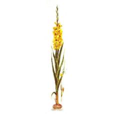 Жёлтый гладиолус (3072)