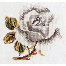Белая роза (TG820A)