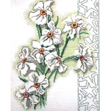 Нарциссы (R179)