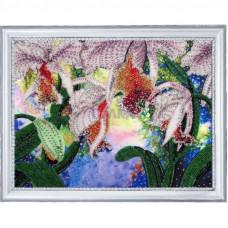 Сияние орхидей (230)