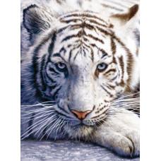 Паззл Белый тигр, 1000 эл. (62016)