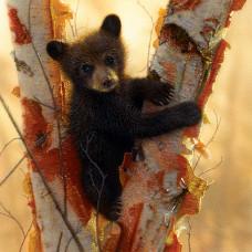 Паззл Curious Cub, 500 эл. (21848)