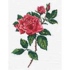 Роза (40-13)