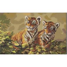 Тигрята (B442)
