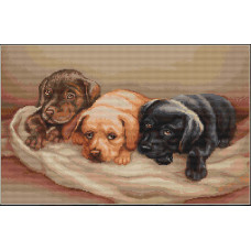 Три собачки (B434)