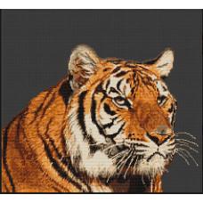 Тигр (B334 )