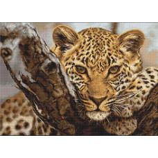 Леопард (B525)