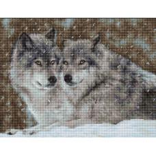Два волка (B2291)