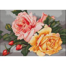 Розы (B485)
