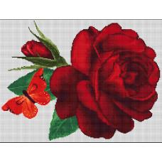 Роза (B294)