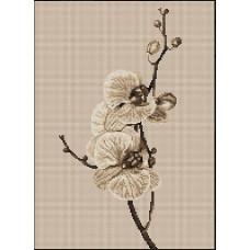 Орхидеи (B291)