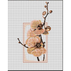 Орхидеи (B288)