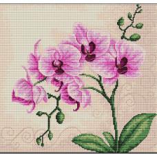 Орхидеи (B2227)