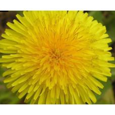 Пигмент жидкий желтый неоновый, 5 г
