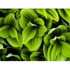 Пигмент жидкий зеленый неоновый, 5 г