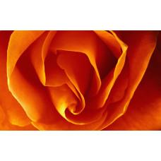 Пигмент жидкий оранжевый неоновый, 5 г