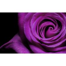 Пигмент жидкий фиолетовый неоновый, 5 г