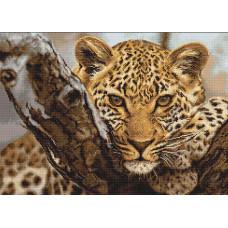 Леопард (G525)