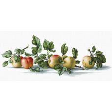 Яблоки (B2265)