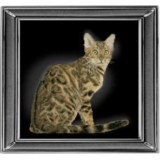 Бенгальская кошка (30912)