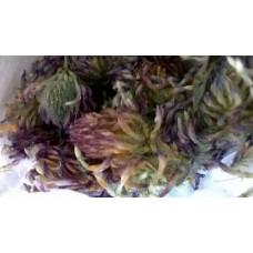 Сушенные соцветия клевера, лепестки (10г)
